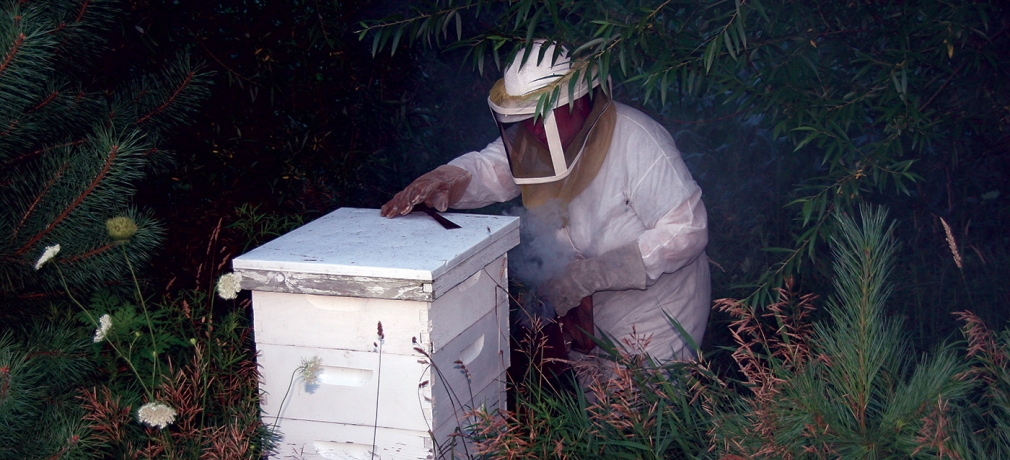 Dawn Tending her Bees, spring 2015. Photograph by Kellie Buckley.